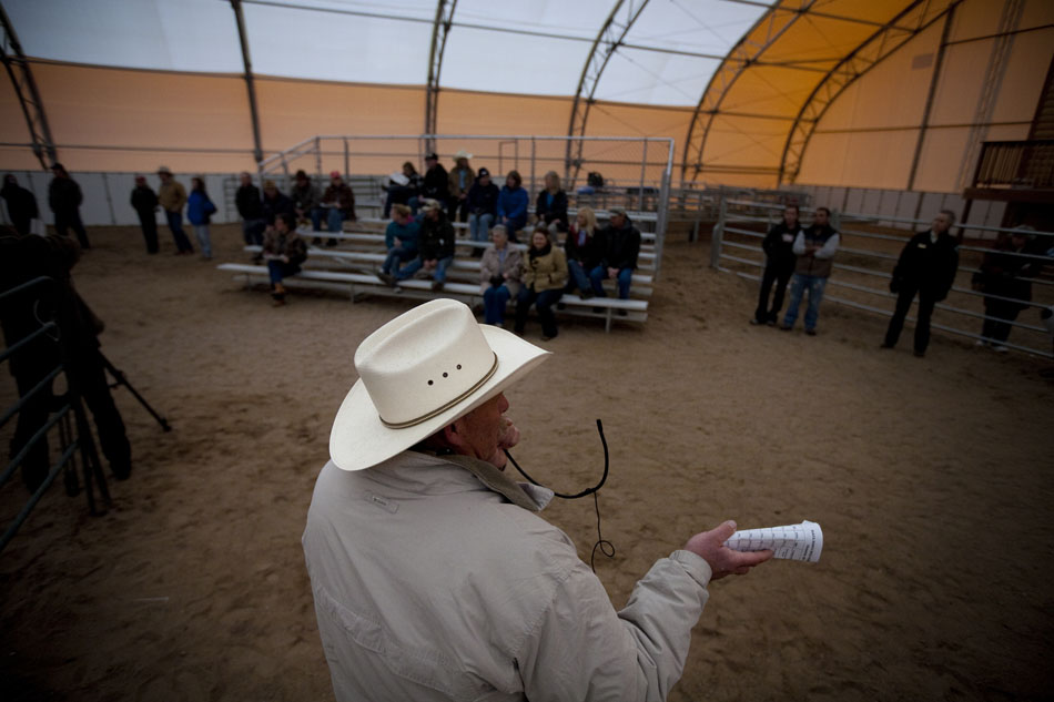 Auctioneer Scott Fluer, of Lander, auctions off a wild-born horse during an adoption sale on Saturday, April 30, 2011, at the Riata Ranch near Cheyenne. The Bureau of Land Management captures wild horses each year and auction them off after some training in an effort to control the wild horse population.