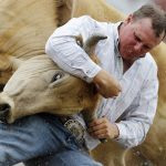 Shawn Downing from Silver Star, Mont. wrestles a steer during the Cheyenne Frontier Days rodeo on Tuesday, July 26, 2011, at Frontier Park. (James Brosher/Wyoming Tribune Eagle)