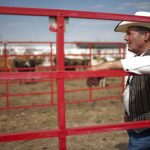 A man who would only identify himself as Stovepipe leans against a gate as he watches as some 550 head of cattle are driven into stalls on Sunday, July 17, 2011, at Frontier Park in Cheyenne during the Cheyenne Frontier Days cattle drive. (James Brosher/Wyoming Tribune Eagle)