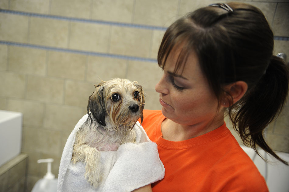 Stefani Ballard, owner of Dogtopia Austin, dries off Angel, a reluctant customer, during a charity dog wash at the shop in Lakeway, Texas on Sunday, July 18, 2010. The charity raised funds for equipment used by military service dogs.