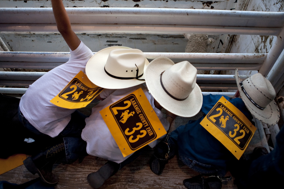 Zach Babb, 7, left, Isaiah Babb, 5, and Logan Mansur-Holaday, 5, bend down to get close to a sheep in the chutes during the Laramie County Fair's mutton bustin on Wednesday, Aug. 10, 2011, at Frontier Park.