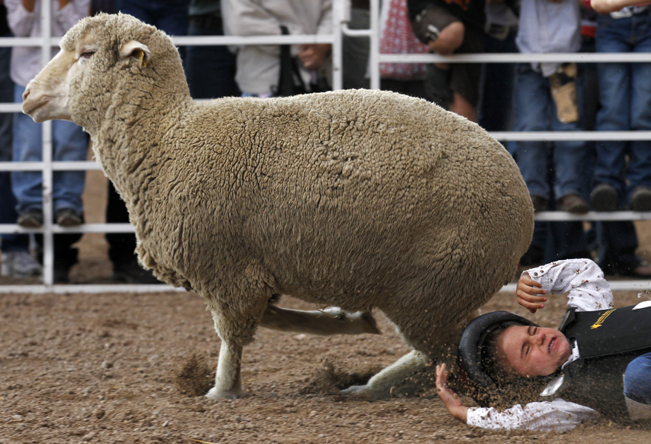 Peyton Perez, 5, hits the ground after letting go of the sheep during the Laramie County Fair mutton bustin on Wednesday, Aug. 10, 2011, at Frontier Park. Perez logged a 79 score.