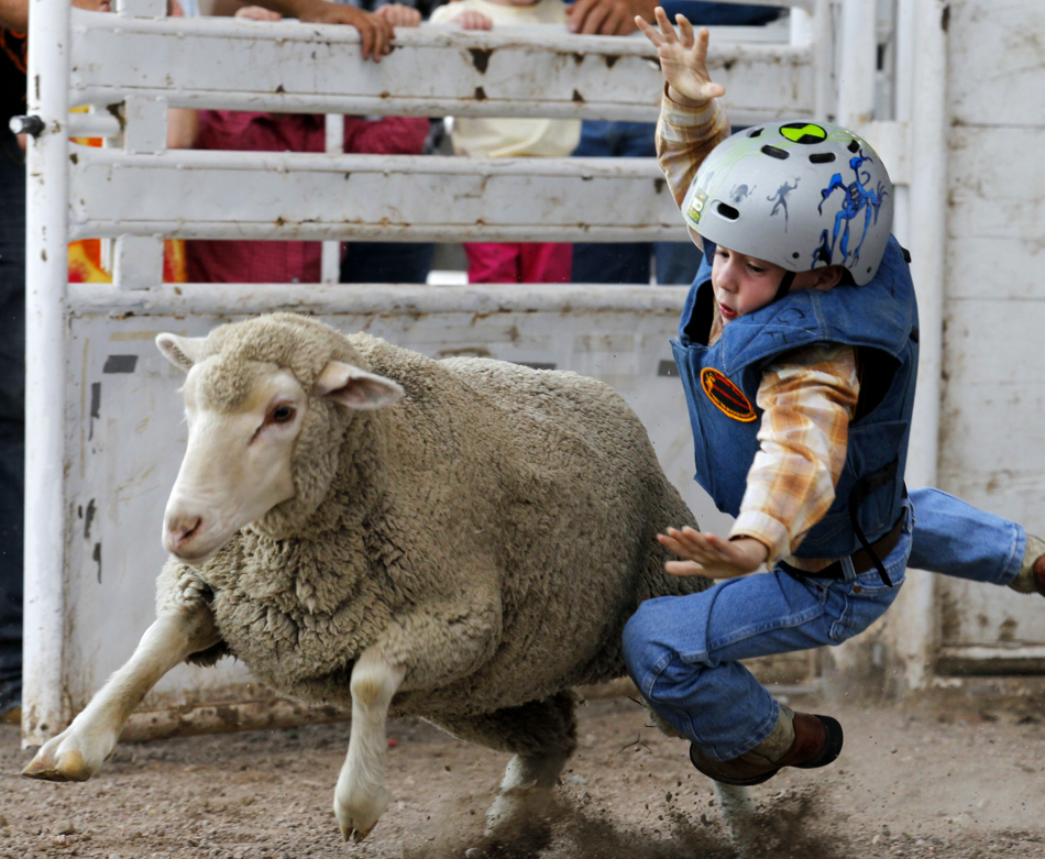 Logan Stockton, 6, falls to the ground after letting go of a sheep during the Laramie County Fair's mutton bustin on Wednesday, Aug. 10, 2011, at Frontier Park. Stockton scored a 78.