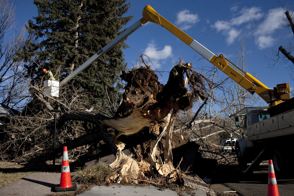 Ed Cullen, a City of Cheyenne Department of Urban Forestry employee, surveys a downed tree on Thursday, Dec. 29, 2011, in front of 1206 and 1208 Cosgriff Court in Cheyenne. High winds toppled the tree onto a car. (James Brosher/Wyoming Tribune Eagle)