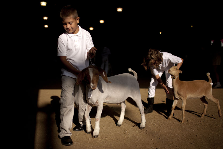 Dustin Luthringer, left, lines up as he takes part in the pee wee goat showmanship during the Cass County 4-H Fair on Monday, July 30, 2012, in Cassopolis, Mich. (James Brosher/South Bend Tribune)
