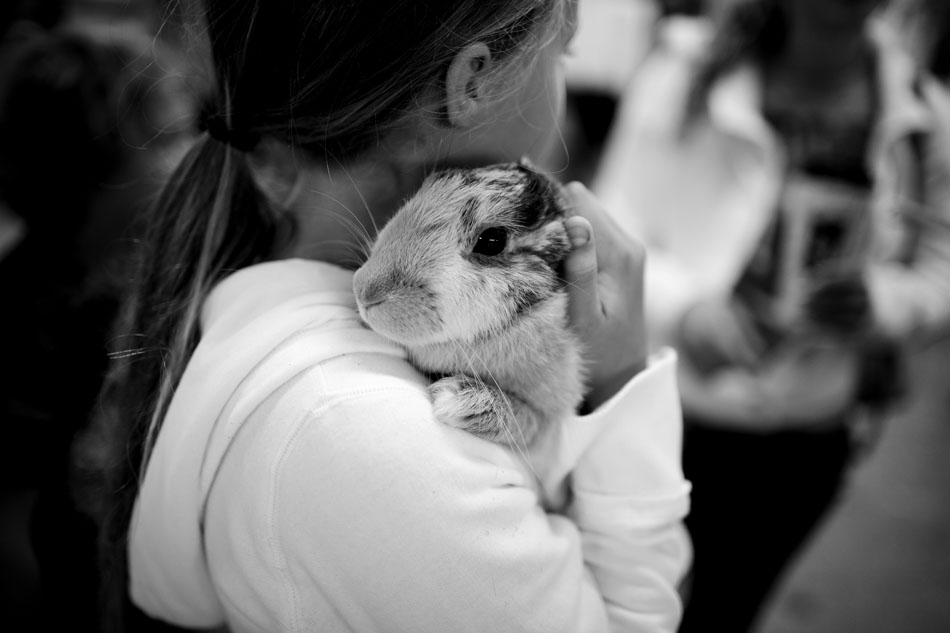 Madison Ficks, 10, holds her rabbit, Pancake, as she and her family wait in the barn for the two to compete during the Berrien County Youth Fair on Monday, Aug. 13, 2012, in Berrien Springs, Mich. Pancake is a one-year-old Harlequin rabbit. (James Brosher/South Bend Tribune)