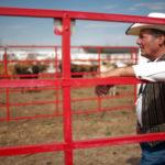 Cheyenne Frontier Days Cattle Drive