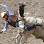 Spud Jones from Tohatchi, N.M. takes a tumble after staying on a bull for 1.8 seconds during Cheyenne Frontier Days rodeo action on Saturday, July 23, 2011, at Frontier Park. (James Brosher/Wyoming Tribune Eagle)
