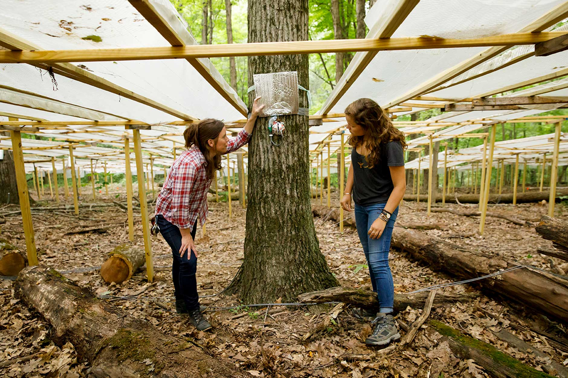 Indiana University Assistant Professor Kim Novick, left, and senior Lily Young inspect a sap flux probe on a tree at the Indiana University Research and Teaching Preserve at Griffy Woods on Monday, June 25, 2018. Researchers are using the probes to study water flow through trees. (James Brosher/IU Communications)