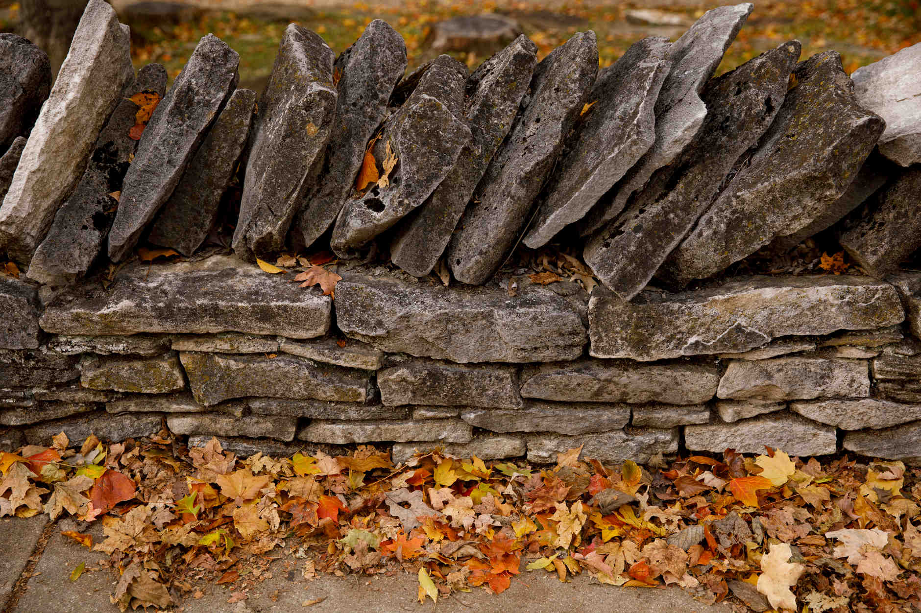 Leaves sit along a stone wall on a fall day at IU Bloomington on Tuesday, Oct. 22, 2019. (James Brosher/Indiana University)