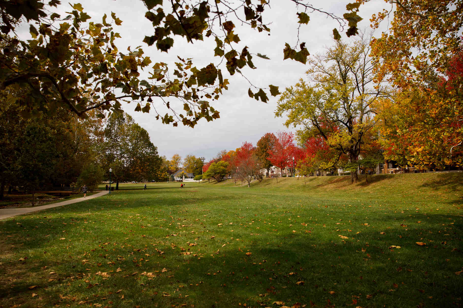 Dunn Meadow is pictured on a fall day at IU Bloomington on Thursday, Oct. 24, 2019. (James Brosher/Indiana University)