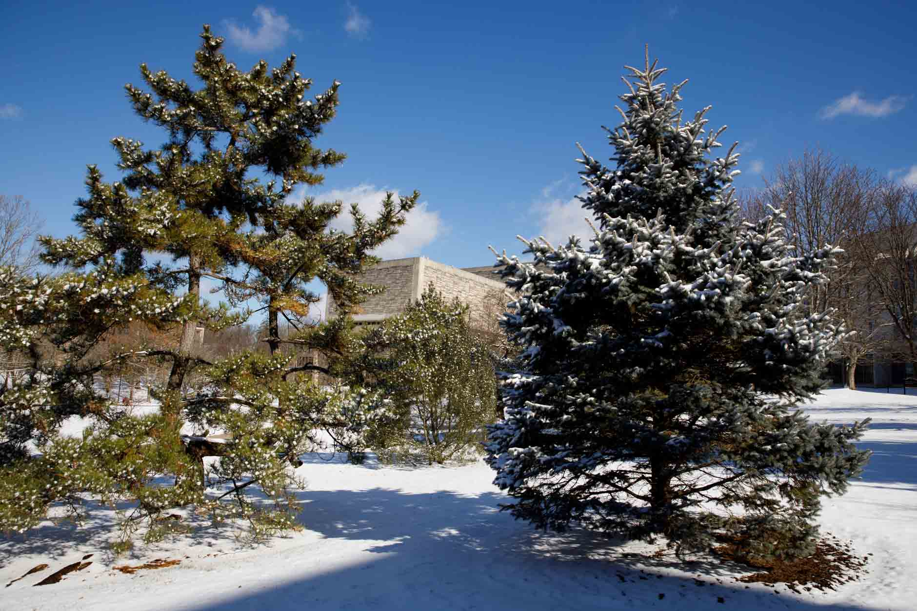 Snow covers trees in the Cox Arboretum on a winter day at Indiana University Bloomington on Thursday, Jan. 28, 2021. Pictured in the distance is the Wells Library. (James Brosher/Indiana University)